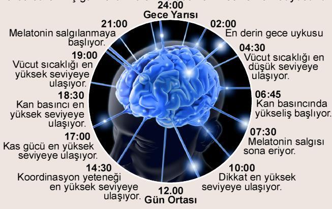 Biyolojik Saat Nasıl Çalışır